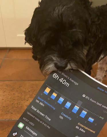 My dog ate my screen time. (Photo/Katie Jain