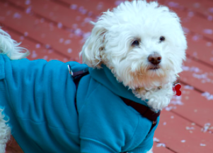Design Your Ideal Winter Day and We'll Tell You Which Puppy You Dress Most Like